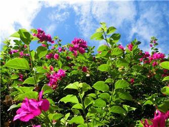 明明是高颜值的花卉 偏偏要做实力中药