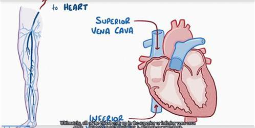 深静脉血栓