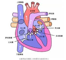 高血压是怎样一步步弄坏心脏和血管的?